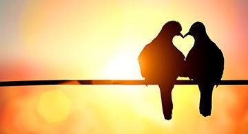 Pledge to Love