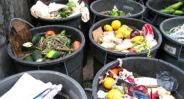Thoughtfully Thinking about Food Waste